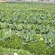 収穫祭20111217_4
