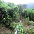 むすび農園(丸山)開墾前20100731_4