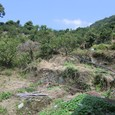 むすび農園(丸山)開墾中20100823_5