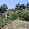 むすび農園(丸山)開墾中20100823_4