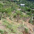 むすび農園(丸山)開墾中20100823_2