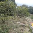 むすび農園(寺口)開墾中20110124_5