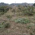 むすび農園(寺口)開墾中20110124_3