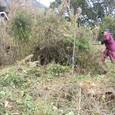むすび農園(寺口)開墾中20110124_2