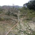 むすび農園(寺口)開墾中20110124_1