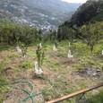 苗木の植樹20110324-2