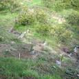 苗木の植樹20110324-1